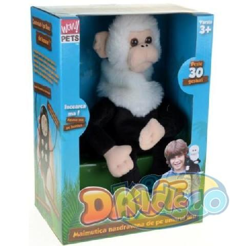 Dave .... The Cheeky Monkey
